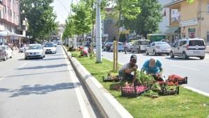 Karasu'da Çiçek Dikimi Çalışmaları Sürüyor