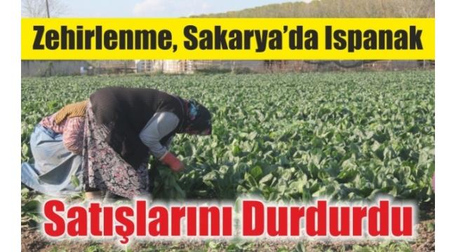 Zehirlenme, Sakarya'da Ispanak Satışlarını Durdurdu