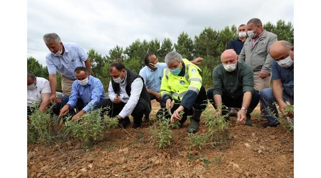 Melen Botanik Vadisi'nde İlk Hasat Yapıldı